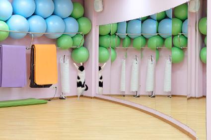 Collage de mirroirs dans salle de fitness, dressing, etc