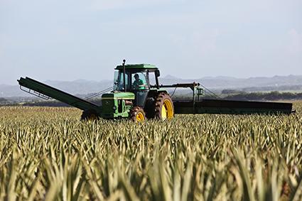 Tracteur dans champ de blé